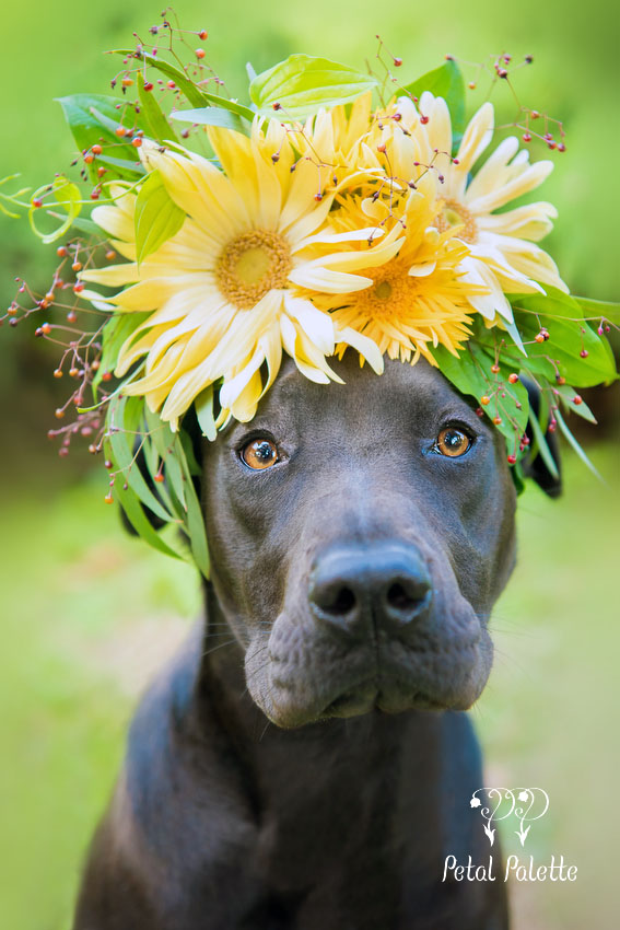 Dog Floral Crown Korea Florist