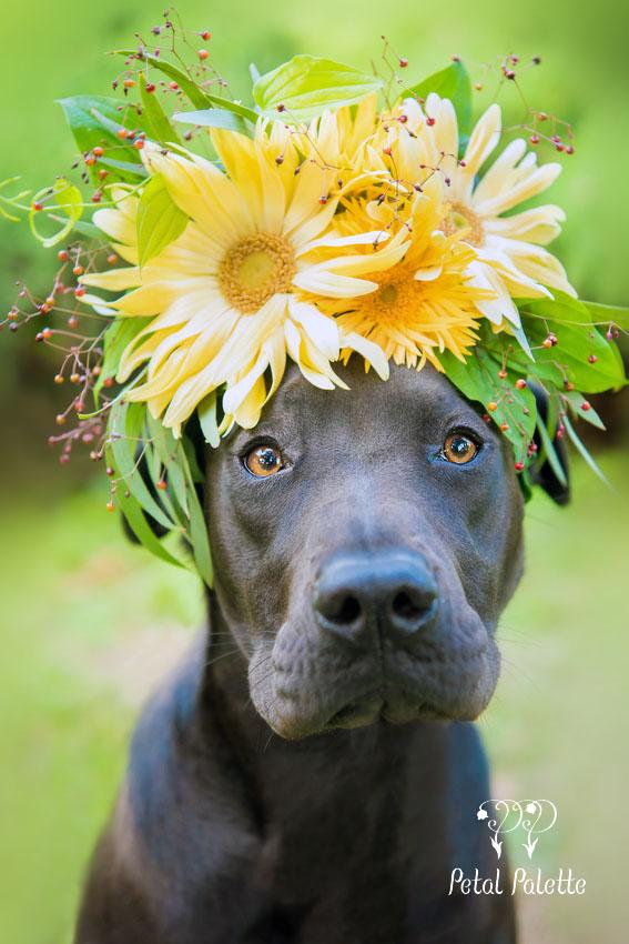 Dog Floral Crown Korea Florist